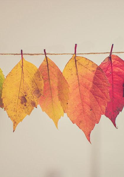 لایههایی از رنگهای پاییز
