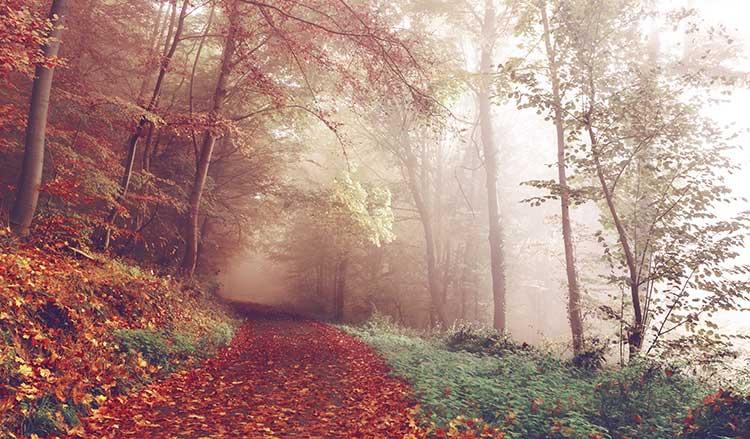 جنگل در فصل پائیز