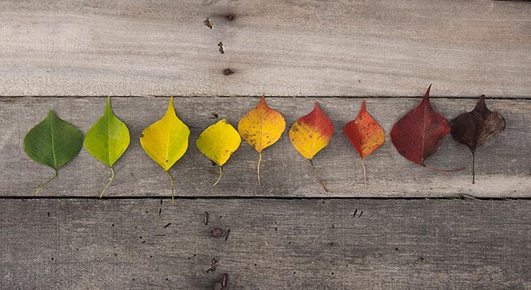 تغییر رنگ برگ در طول زمان