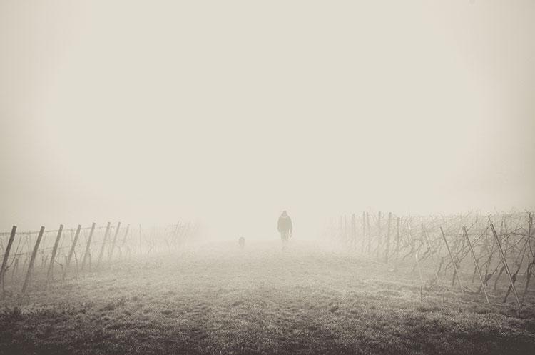 قدم زدن در مه