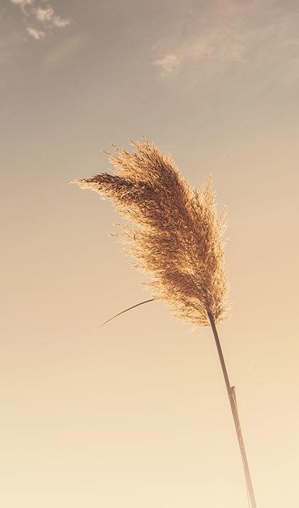 صحرا در باد