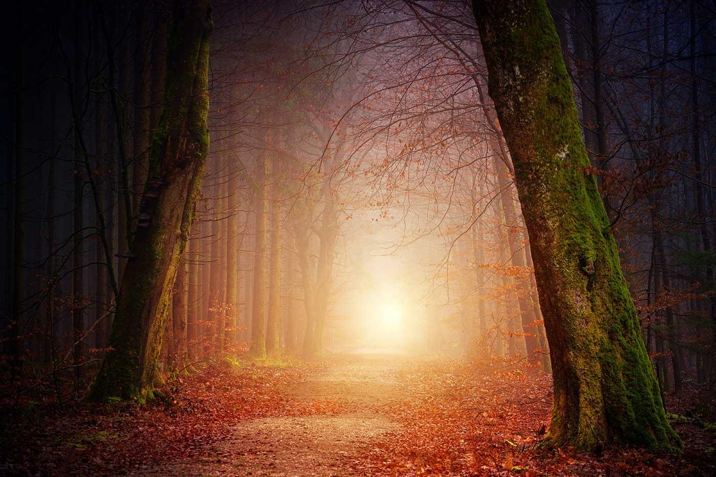 جادهای در جنگل